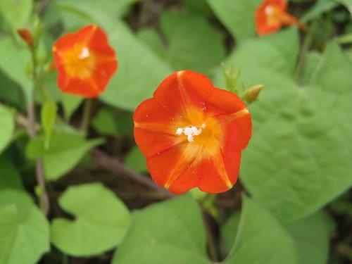 野草の花(2)