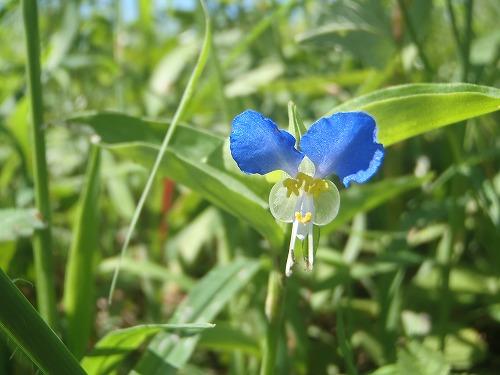 野草の花(3)
